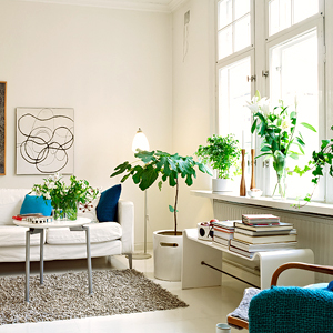 Best living room plants 28 images best indoor house plants for your living room buy 5 best - Best room plants ...
